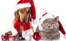 【圣诞&元旦】欢喜迎双节发货公告